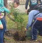 Засаждане на дръвчета в двора на училището