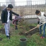 Засаждане на туя в двора на училището